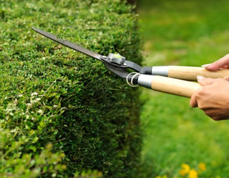 Tuinaanleg, tuinontwerp, tuinonderhoud